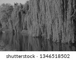 close up of weeping willows... | Shutterstock . vector #1346518502