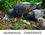 pigeons and their extended... | Shutterstock . vector #1346554655
