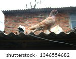 pigeons and their extended... | Shutterstock . vector #1346554682