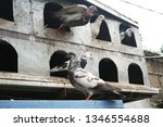 pigeons and their extended... | Shutterstock . vector #1346554688