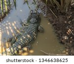 close up  large crocodile in... | Shutterstock . vector #1346638625