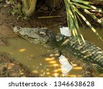 close up  large crocodile in... | Shutterstock . vector #1346638628