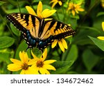 Swallowtail Butterfly On Yello...