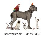 Stock photo group of pets dog cat bird reptile rabbit isolated on white 134691338