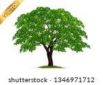 tree  isolated on white... | Shutterstock .eps vector #1346971712
