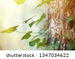 deciduous forest entwined with... | Shutterstock . vector #1347034622