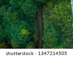 hiking trail among the forest a ... | Shutterstock . vector #1347214505