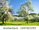 beautiful old apple tree garden ... | Shutterstock . vector #1347421295