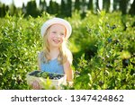 cute little girl picking fresh... | Shutterstock . vector #1347424862