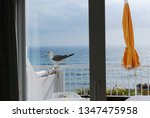 Seagull Sitting On Ledge...