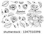collection set of jasmine...   Shutterstock .eps vector #1347510398
