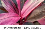 pink colour beautiful leaves... | Shutterstock . vector #1347786812