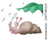 Watercolor Snail Snail Holds A...