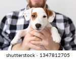 people  pets and animals... | Shutterstock . vector #1347812705