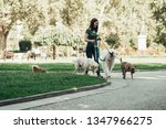 Stock photo dog walker enjoying with dogs while walking outdoors 1347966275