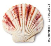 sea shell  isolated on white... | Shutterstock . vector #1348010825