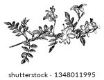 the picture is of a flowering... | Shutterstock .eps vector #1348011995