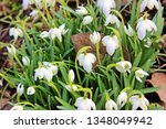 galanthus nivalis and spring... | Shutterstock . vector #1348049942
