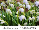 galanthus nivalis and spring... | Shutterstock . vector #1348049945