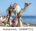 portrait of two camels on coast ... | Shutterstock . vector #1348087712