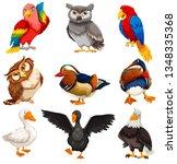 diverse birds standing set... | Shutterstock .eps vector #1348335368