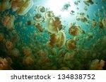 Millions Of Golden Jellyfish ...