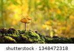 Mushroom On Moss  Autumnal...
