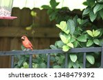red male northern cardinal... | Shutterstock . vector #1348479392