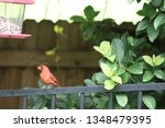 red male northern cardinal... | Shutterstock . vector #1348479395