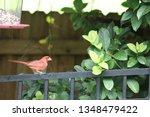 red male northern cardinal... | Shutterstock . vector #1348479422