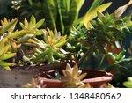 pretty green succulent plants...   Shutterstock . vector #1348480562