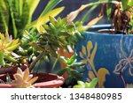 pretty green succulent plants...   Shutterstock . vector #1348480985