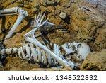 human skull and bone lies in...   Shutterstock . vector #1348522832