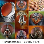 Collage Of Extreme Macro...