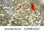Male And Female Cardinals Sit...