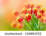 Bouquet of red and yellow tulips  over blurred background. Fresh spring flowers. - stock photo