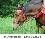 horse in russian national... | Shutterstock . vector #1348982615
