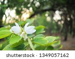 refreshing nature picture used... | Shutterstock . vector #1349057162