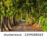 the golden mahogany hallway | Shutterstock . vector #1349088065