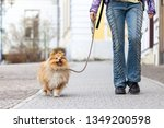 Stock photo a woman leads her dog on a leash 1349200598