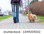 Stock photo a woman leads her dog on a leash 1349205032