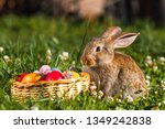 bunny and easter colorful eggs... | Shutterstock . vector #1349242838