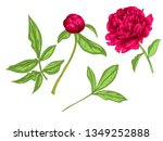 red peony floral botanical... | Shutterstock . vector #1349252888