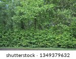 lush leaves on the summer trees. | Shutterstock . vector #1349379632