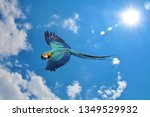 blue and gold macaw  ara... | Shutterstock . vector #1349529932
