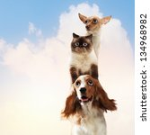 Stock photo three home pets next to each other on a light background funny collage 134968982