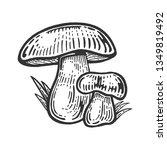 Porcini White Edible Sketch...