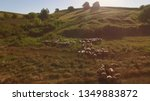 group of sheep is running.... | Shutterstock . vector #1349883872