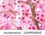 the cherry blossoms in full... | Shutterstock . vector #1349904065