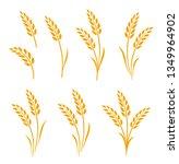 set of hand drawn yellow wheat... | Shutterstock . vector #1349964902